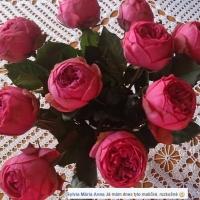 Dárek - růže